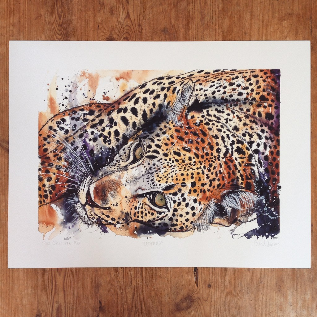 Leopard at Rest, A2 (sold)  - prints available in online shop