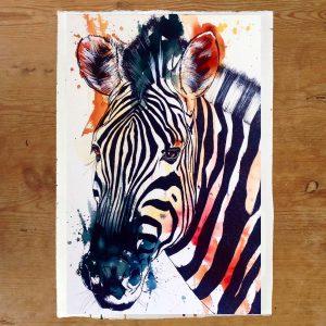 website zebra
